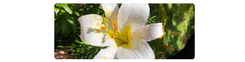 Посмотрите на полевые лилии…